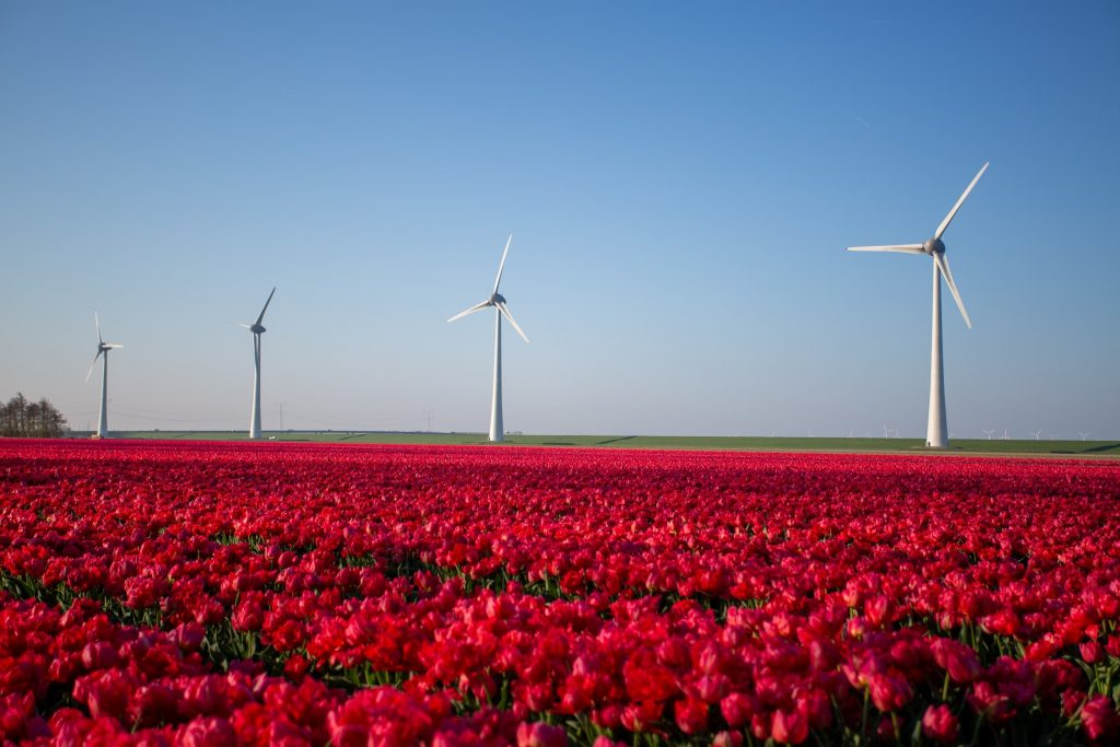 Wind Energy Being used   What is Wind Technology and renewables?